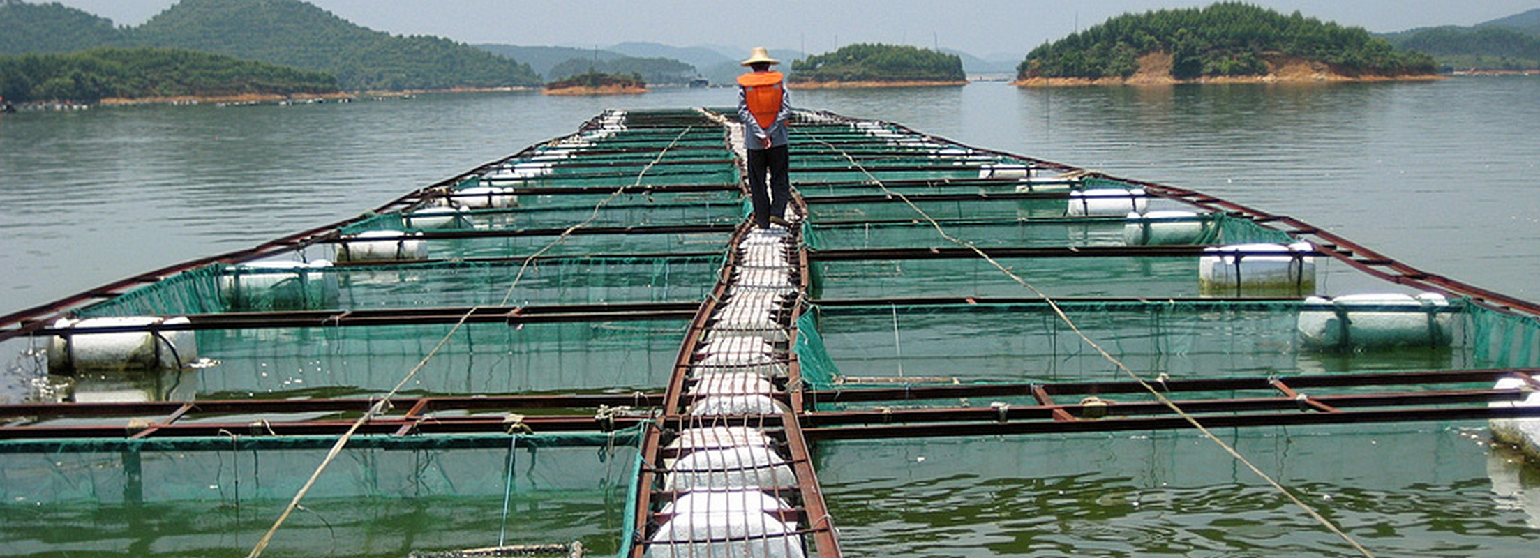 an examination of the issues and improvements for shrimp aquaculture and the environment Improve the participatory social impact assessment (psia)- the quality and the quality and use of p-sia that deals with community impacts of aquaculture need to be.